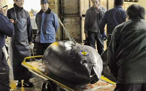 A Giant Bluefin Tuna was Sold for more than $300,000 in Japan