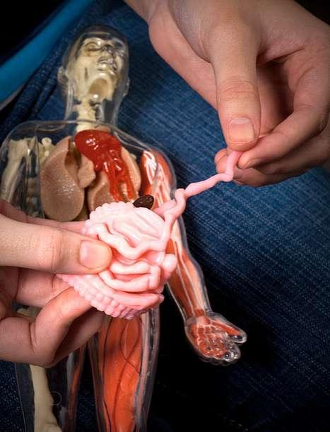 Realistic Anatomy Models