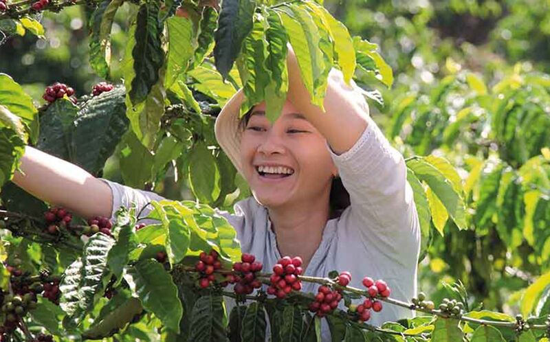 Sustainable Coffee Commitment Initiatives