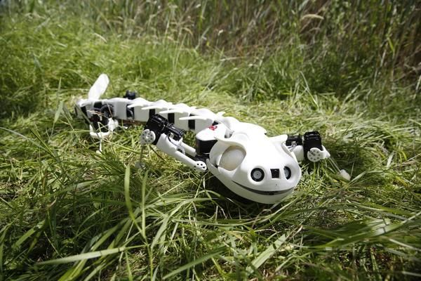 Printed Robot Salamanders