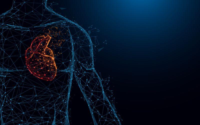 3D-Printed Human Organs