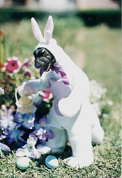 Easter Bunny Funny
