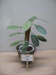 A Plant With Solar Cells