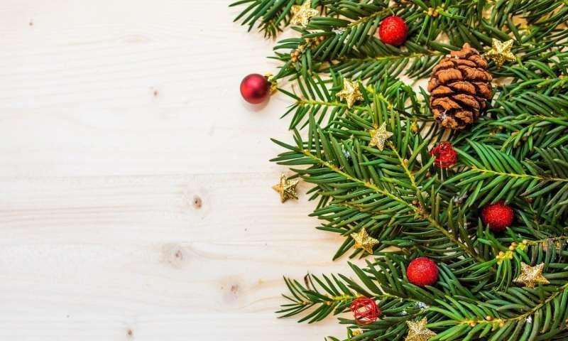Pine Needle Food Sweeteners