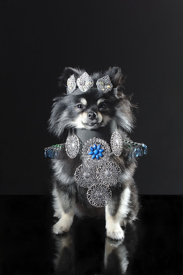 Accessorized Dog Photography
