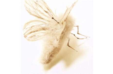 Uncombed Bug Creations