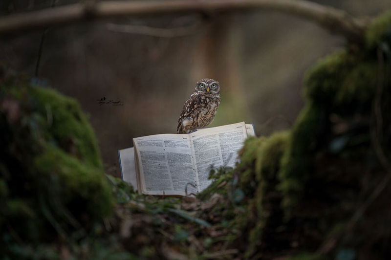 Adventurous Owl Photography