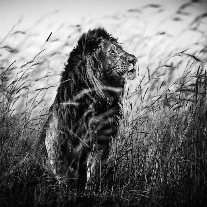 Dignified Wildlife Photography