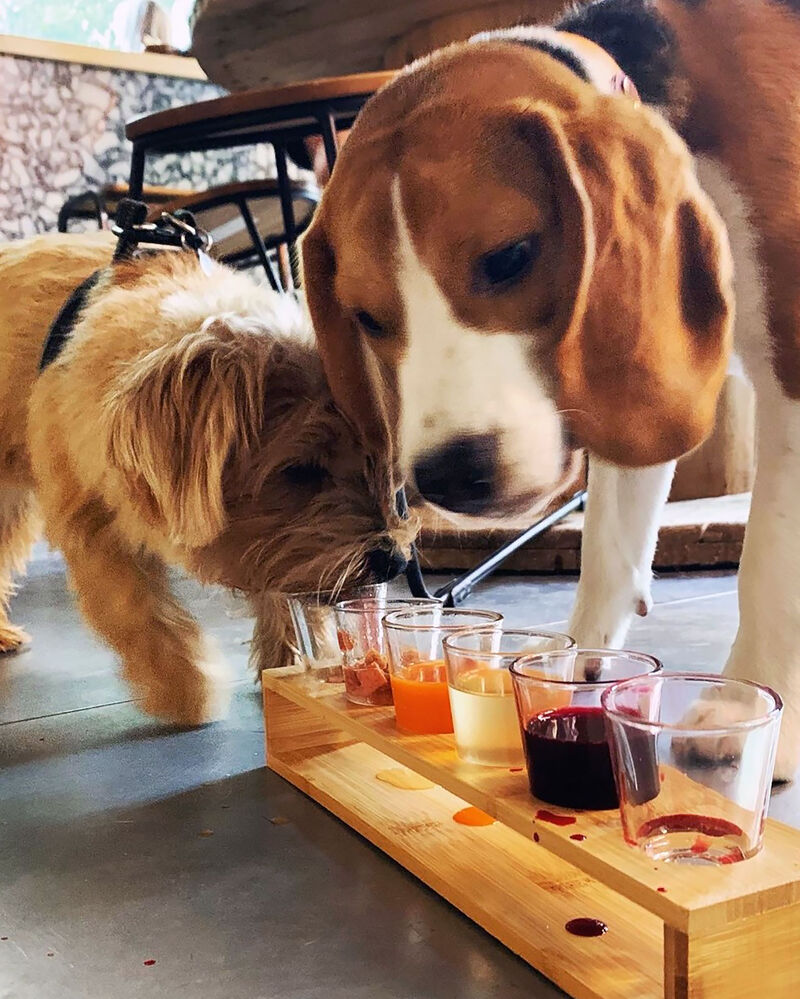 Dog-Friendly Cocktail Bars
