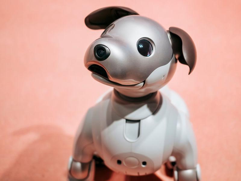 Programmable Robot Pets