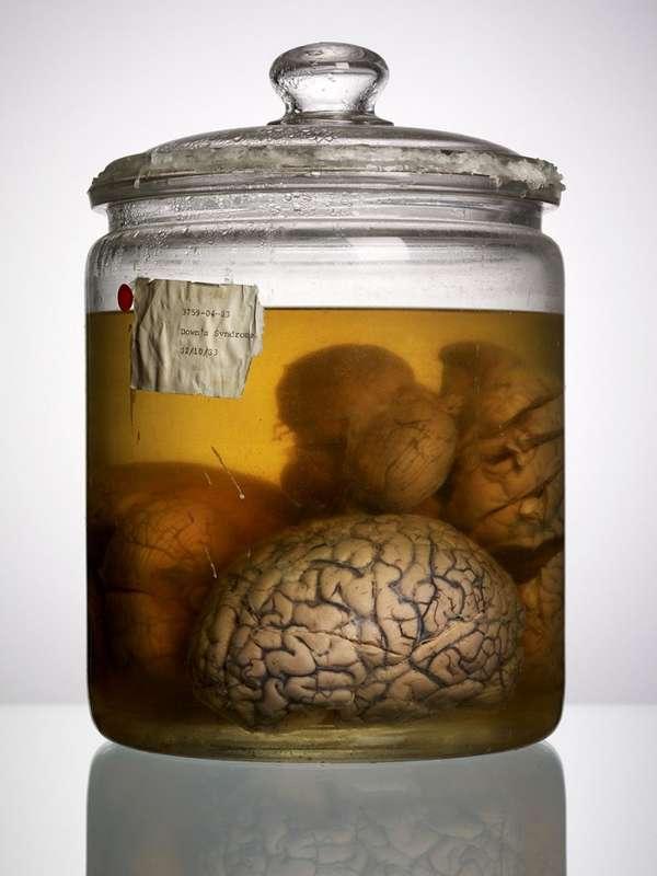 Contorted Cranium Photography