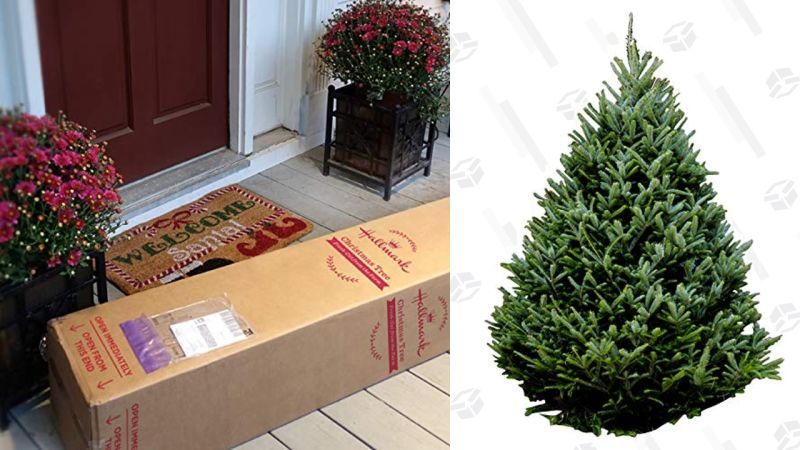 Home-Delivered Christmas Trees