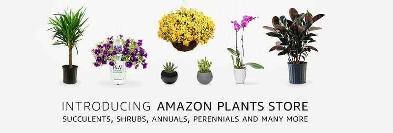 eCommerce Plant Shops