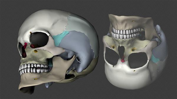3D-Printed Biological Bones