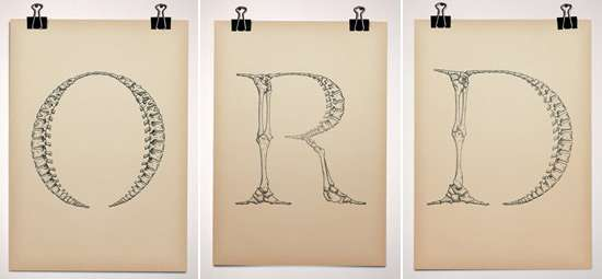 Anatomical Typography Fonts Made Of Bones