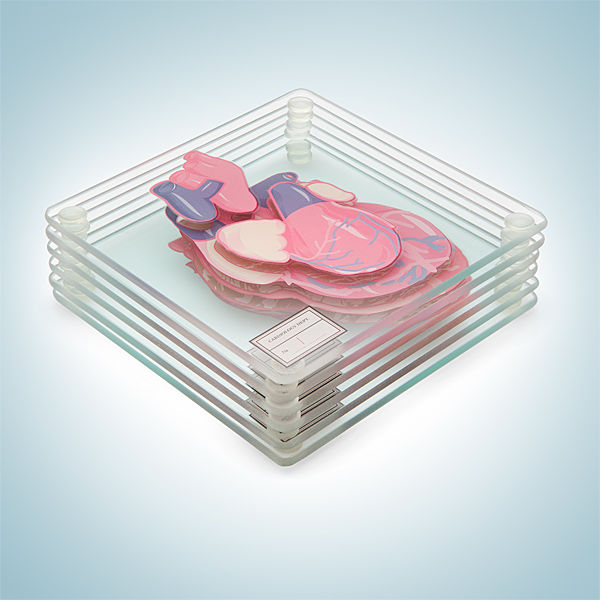 Anatomic Heart Coasters