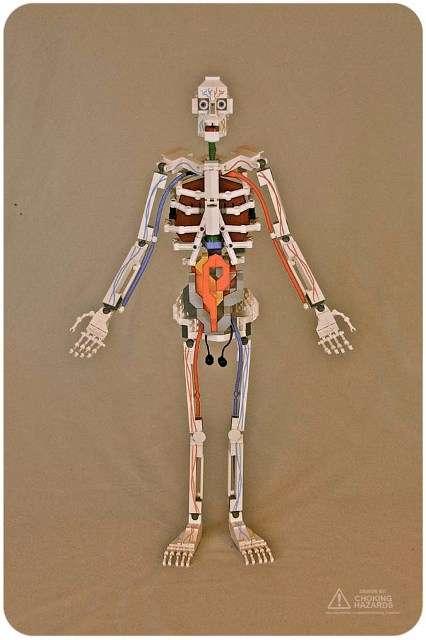 Toy Brick Anatomy Models