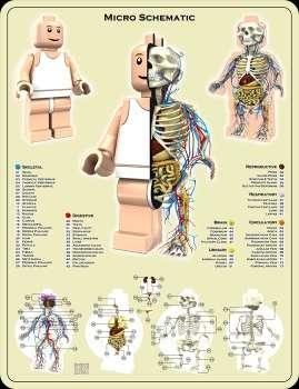 Anatomically-Correct Toys