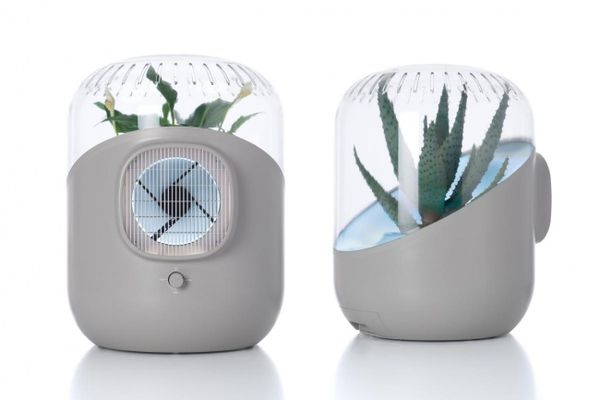Plant-Powered Air Purifiers