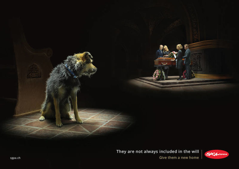 Heart-Wrenching Animal Abandonment Ads