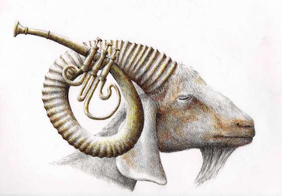 Musical Mammal Illustrations
