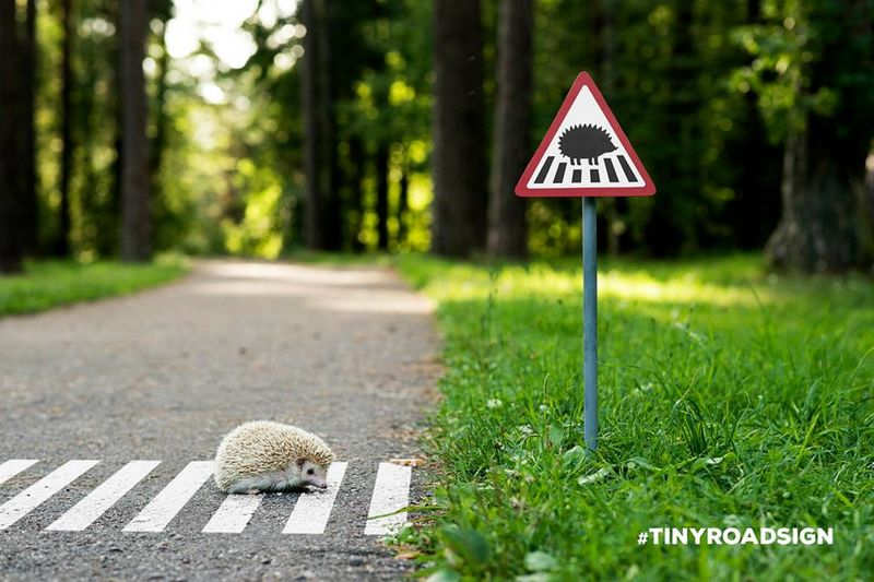 Adorable Animal Road Signs