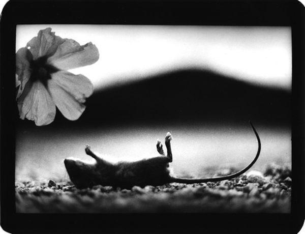 Intimate Animal Street Photgraphy