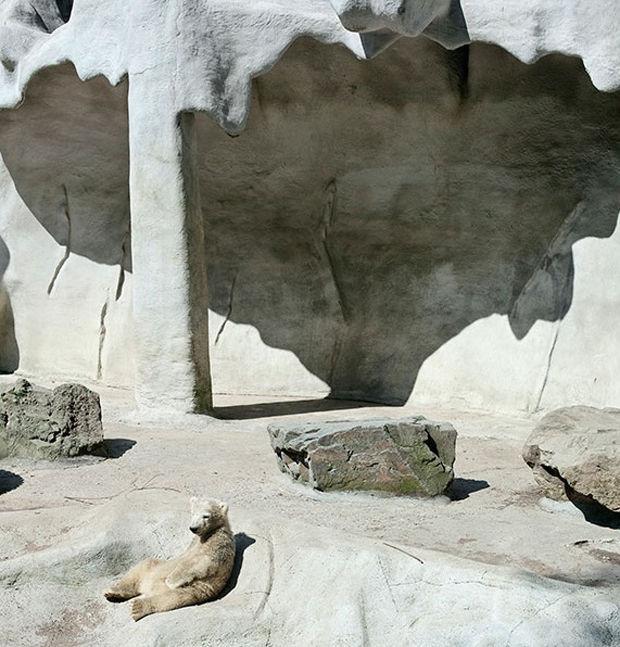 Unnatural Zoo Environment Photos