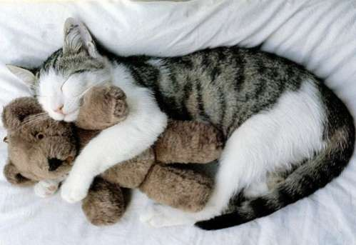 Stuffed Animal Mother Cat With Kittens