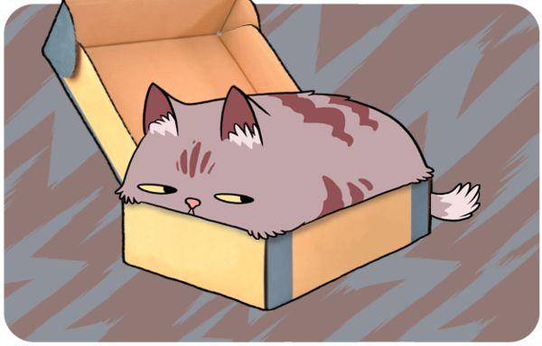 Explanatory Feline GIFs