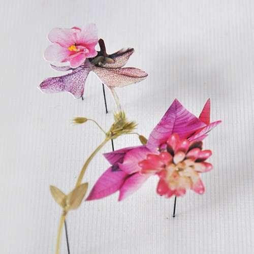 Paper-Crane Plant Portraits