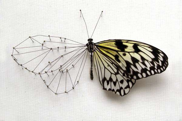 Hybrid Insect Sculptures