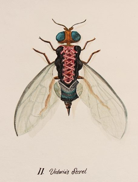 Fashionable Insect Illustrations