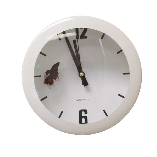 Fish Tank Time Pieces