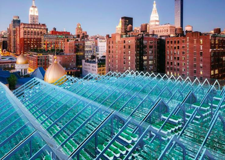 Fish-Fed Rooftop Gardens