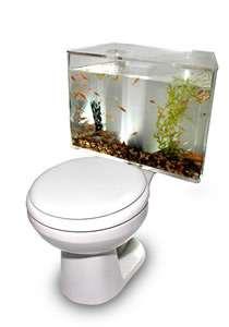 Fish Tank Toilet The Aquariass