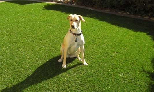 Paw-Friendly Dog Kennels