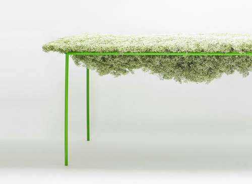 Baby's Breath Furniture