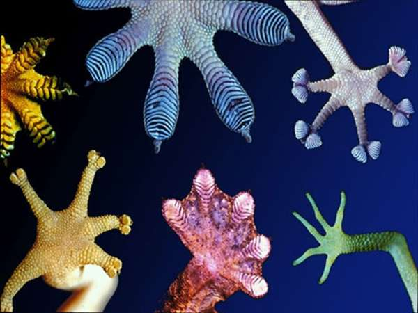 Biomimicry to Solve Problems