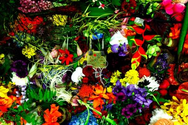 Floral Sound Exhibits