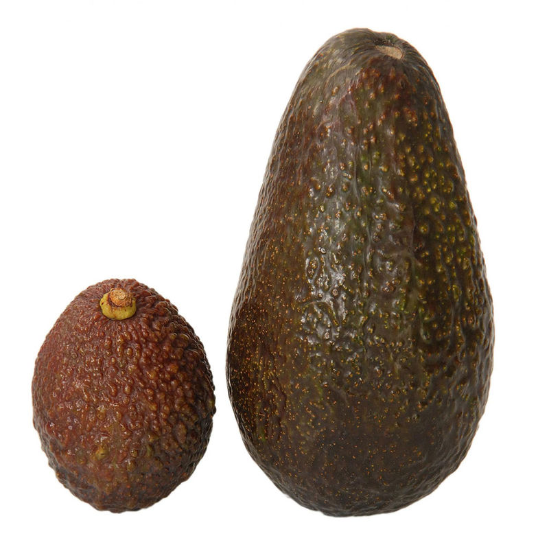 Small-Scale Avocados