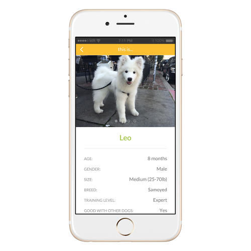 Dog-Borrowing Apps