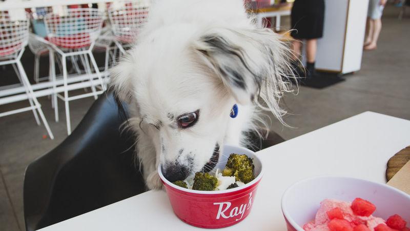 Sustainable Canine Brunch Menus