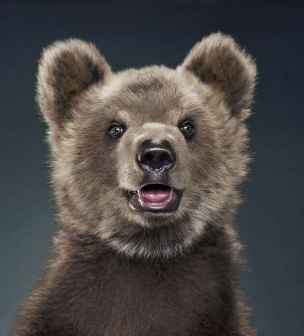 Emotive Grizzly Photo Shoots : Bear by Jill Greenberg