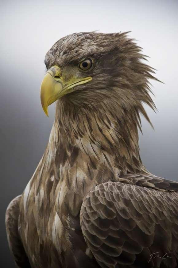 Regal Avian Photography