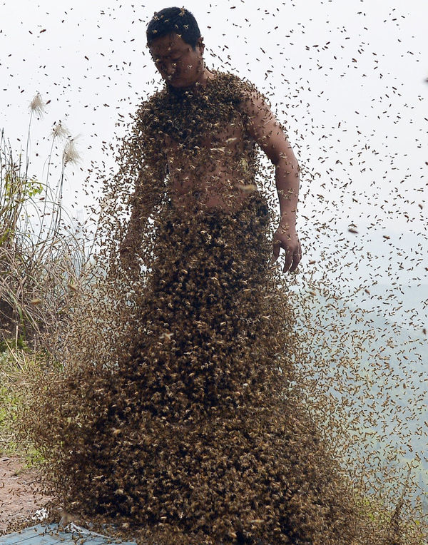 Bee Bearding Publicity Stunts