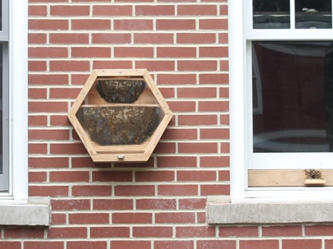 Home Honeybee Units