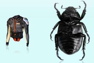 Beetle Inspired Body Armor