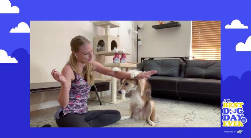 Dog-Centric Virtual Events