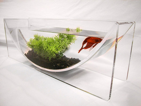 Modern u shaped fish bowls betta fish bowl for Betta fish tank ideas